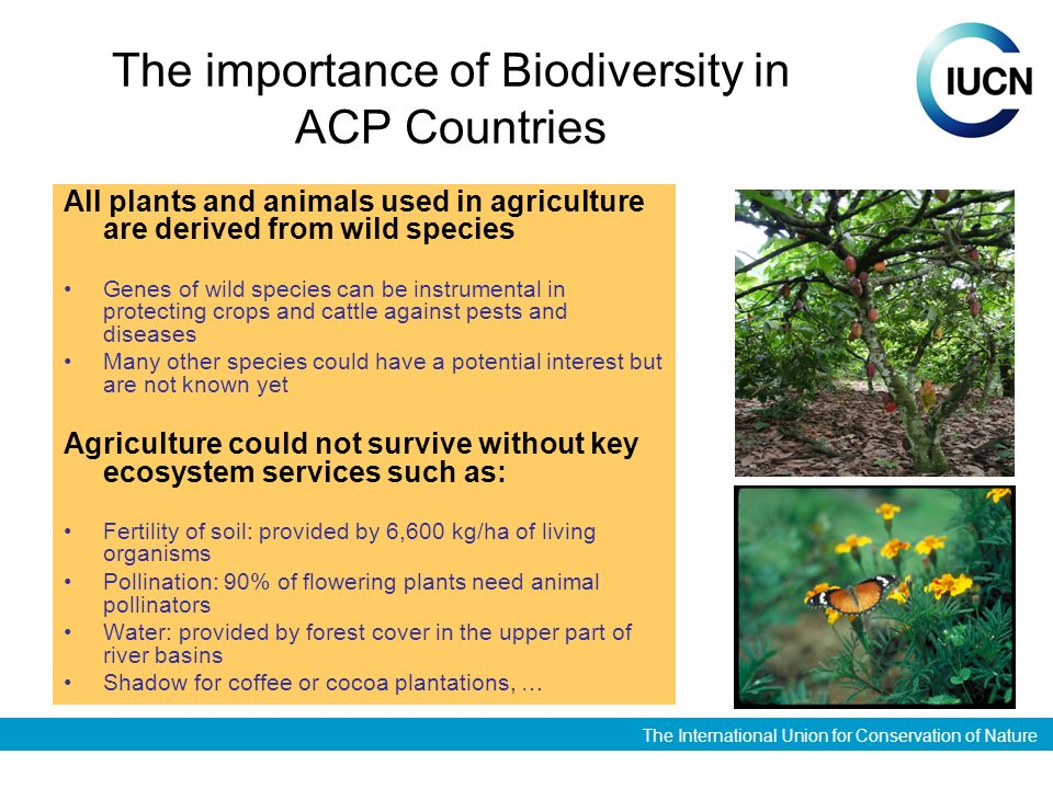 The International Union for Conservation of Nature The importance of Biodiversity in ACP Countries All plants and animals used in agriculture are derived from wild species Genes of wild species can be instrumental in protecting crops and cattle against pests and diseases Many other species could have a potential interest but are not known yet Agriculture could not survive without key ecosystem services such as: Fertility of soil: provided by 6,600 kg/ha of living organisms Pollination: 90% of flowering plants need animal pollinators Water: provided by forest cover in the upper part of river basins Shadow for coffee or cocoa plantations, …