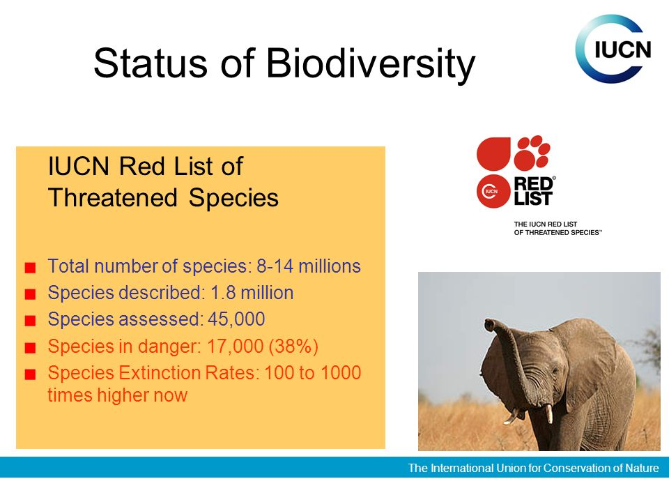 The International Union for Conservation of Nature Status of Biodiversity IUCN Red List of Threatened Species Total number of species: 8-14 millions Species described: 1.8 million Species assessed: 45,000 Species in danger: 17,000 (38%) Species Extinction Rates: 100 to 1000 times higher now