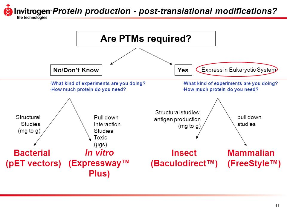 11 Protein production - post-translational modifications? Are PTMs required? No/Dont Know In vitro (Expressway Plus) Bacterial (pET vectors) Pull down