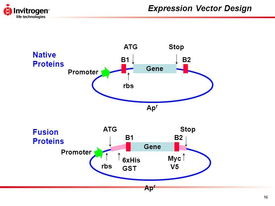 16 Expression Vector Design B2B1 Ap r Gene ATGStop Promoter rbs Native Proteins B2B1 Ap r Gene ATGStop Promoter Fusion Proteins 6xHis GST Myc V5 rbs