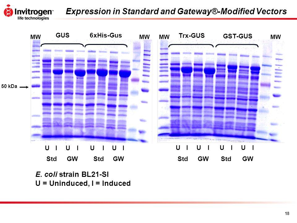 18 Expression in Standard and Gateway®-Modified Vectors GUS6xHis-Gus GST-GUS Trx-GUS UIIIIUUU StdGWStdGWStdGWStdGW UIIIIUUU MW 50 kDa E. coli strain B