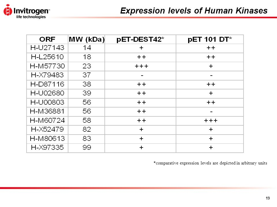 19 Expression levels of Human Kinases *comparative expression levels are depicted in arbitrary units