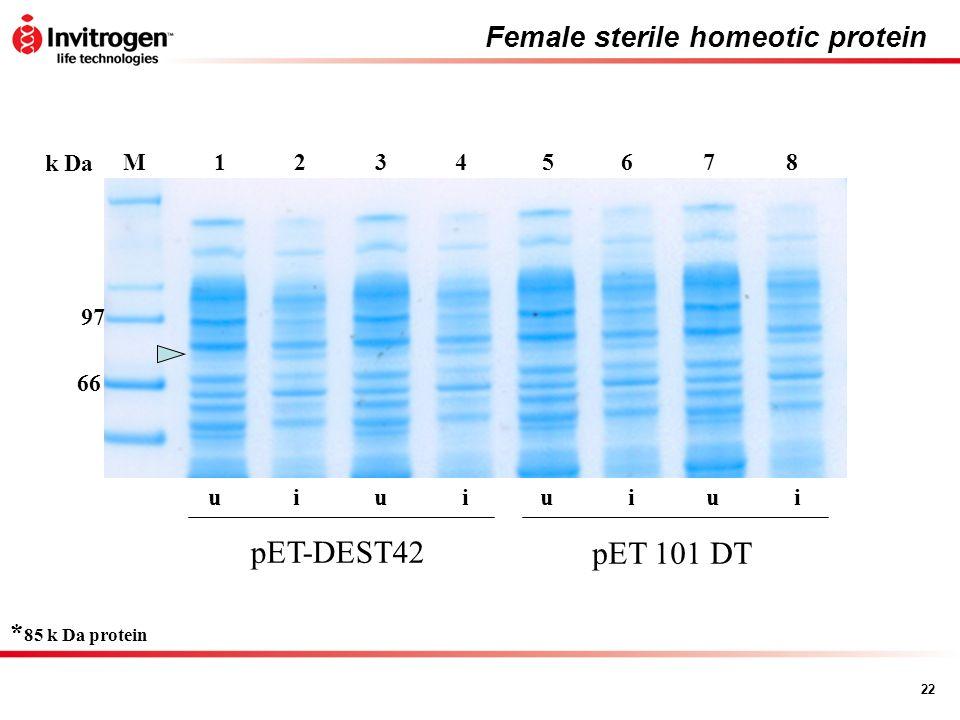 22 Female sterile homeotic protein 56784321M k Da 97 66 uuuuiiii pET-DEST42 pET 101 DT * 85 k Da protein