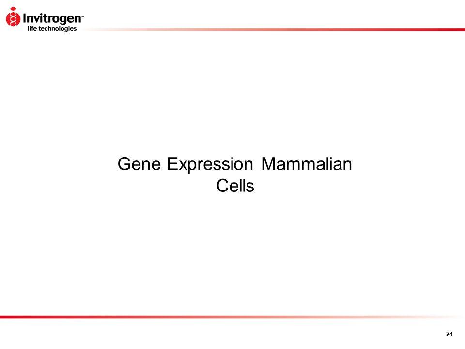 24 Gene Expression Mammalian Cells