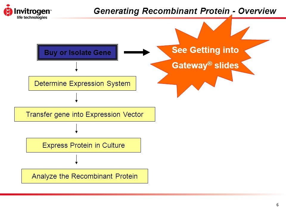 6 Generating Recombinant Protein - Overview Buy or Isolate Gene Determine Expression System Express Protein in Culture Analyze the Recombinant Protein