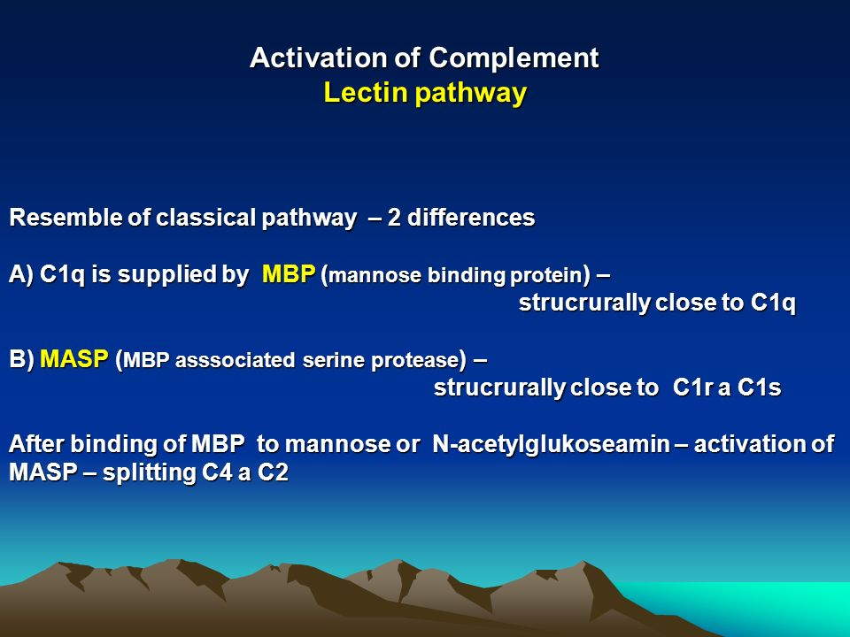 Activation of Complement Lectin pathway Resemble of classical pathway – 2 differences A) C1q is supplied by MBP ( mannose binding protein ) – strucrurally close to C1q B) MASP ( MBP asssociated serine protease ) – strucrurally close to C1r a C1s After binding of MBP to mannose or N-acetylglukoseamin – activation of MASP – splitting C4 a C2