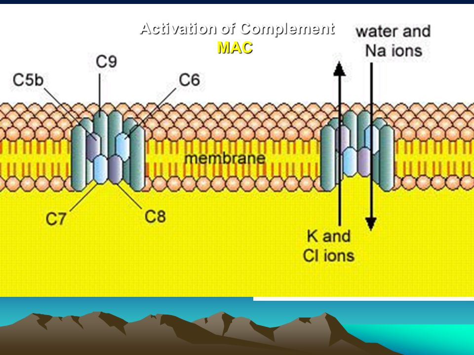 Activation of Complement MAC