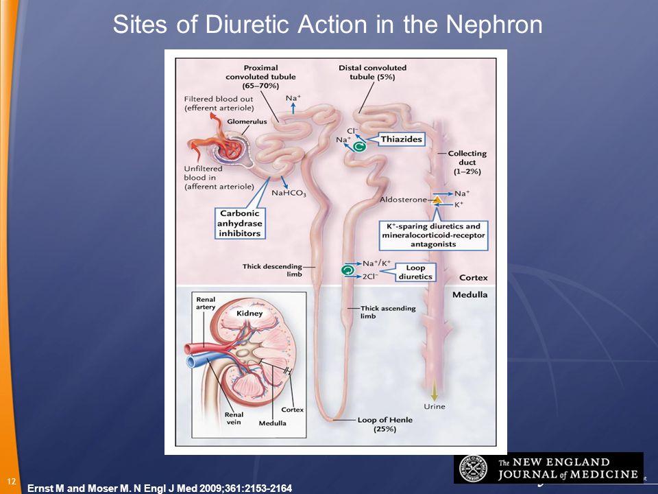 12 Ernst M and Moser M. N Engl J Med 2009;361:2153-2164 Sites of Diuretic Action in the Nephron