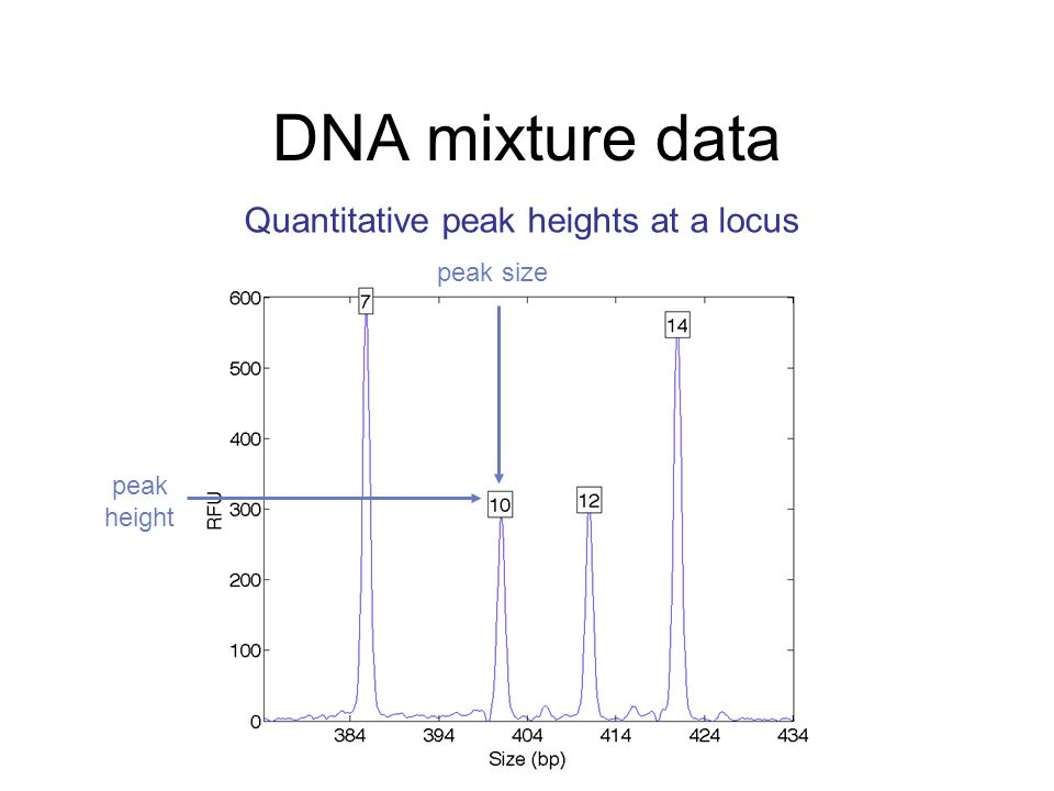 DNA mixture data Quantitative peak heights at a locus peak size peak height