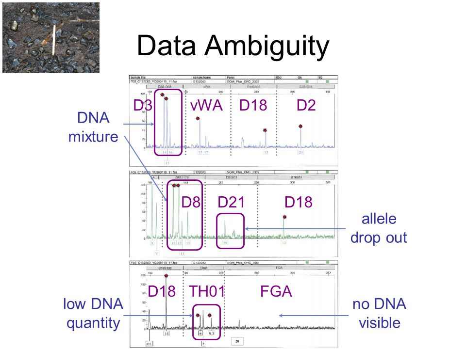 Data Ambiguity DNA mixture low DNA quantity allele drop out D21D18D8 vWAD3D18D2 FGATH01D18 no DNA visible