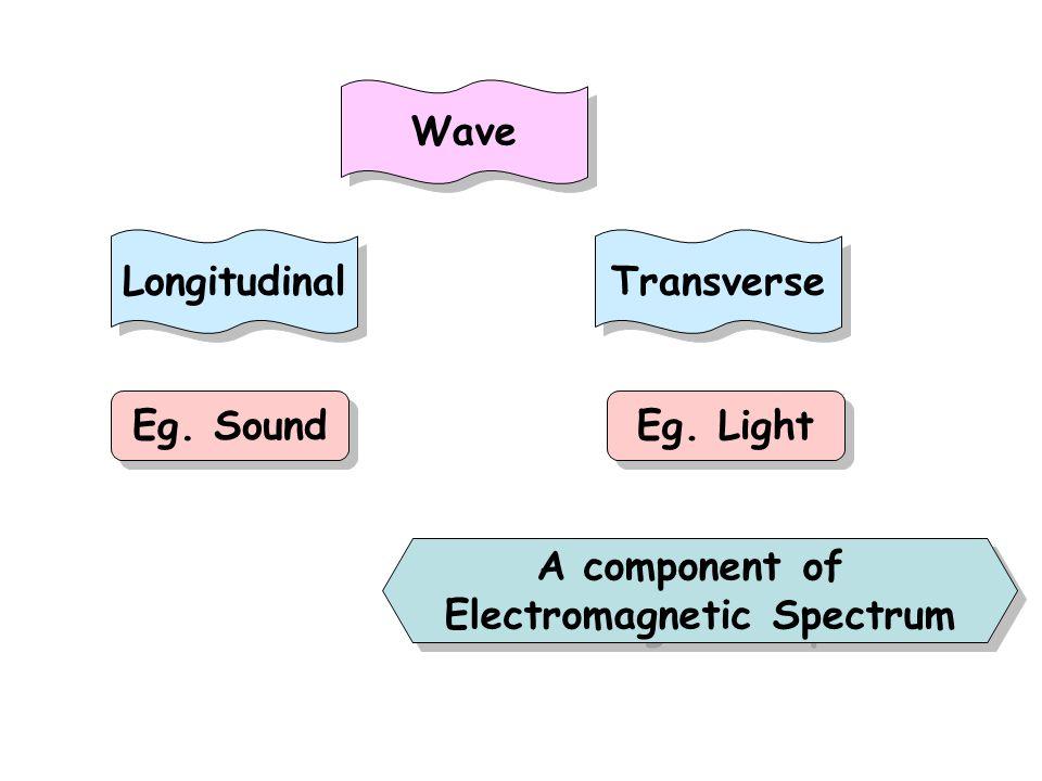 Wave Transverse Longitudinal Eg. Sound Eg. Light A component of Electromagnetic Spectrum A component of Electromagnetic Spectrum