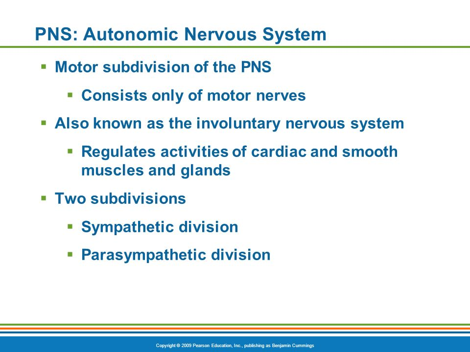 Copyright © 2009 Pearson Education, Inc., publishing as Benjamin Cummings PNS: Autonomic Nervous System Motor subdivision of the PNS Consists only of