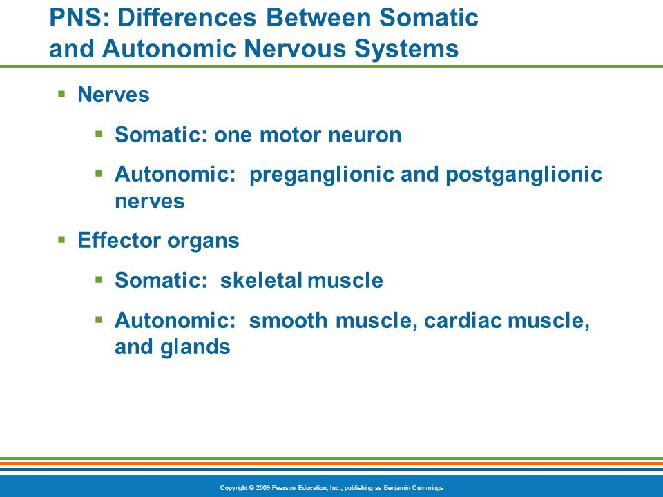 Copyright © 2009 Pearson Education, Inc., publishing as Benjamin Cummings PNS: Differences Between Somatic and Autonomic Nervous Systems Nerves Somati