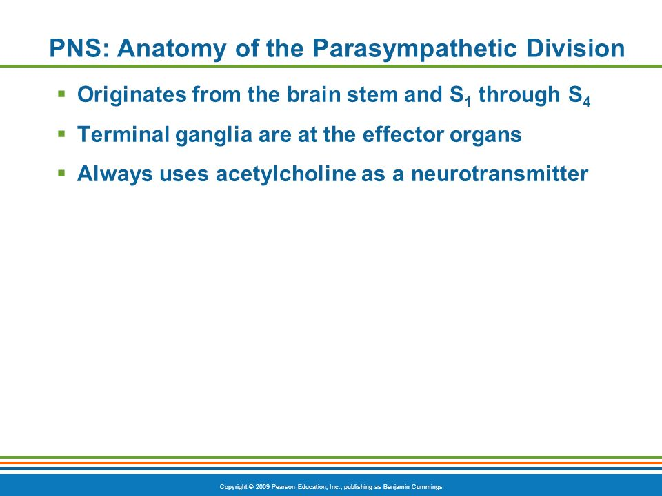 Copyright © 2009 Pearson Education, Inc., publishing as Benjamin Cummings PNS: Anatomy of the Parasympathetic Division Originates from the brain stem