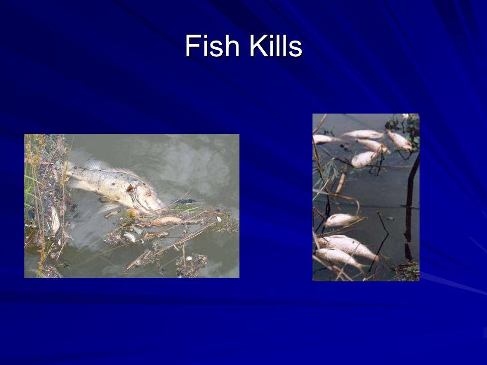 Fish Kills