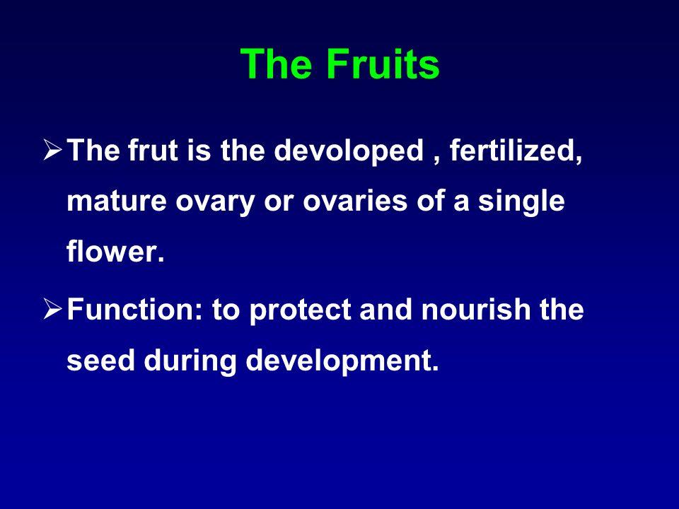 A-Superior Fruits: e.g Linseed, Solanaceae, Mustard. B-Inferior fruits: Cardamom, Umbelliferae