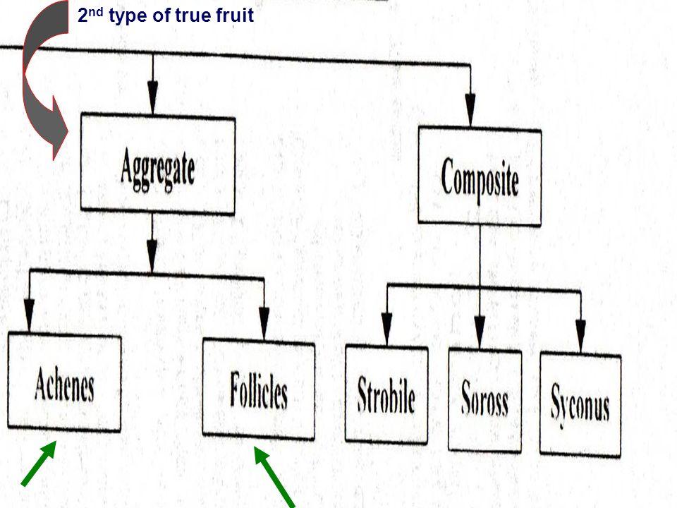 2 nd type of true fruit