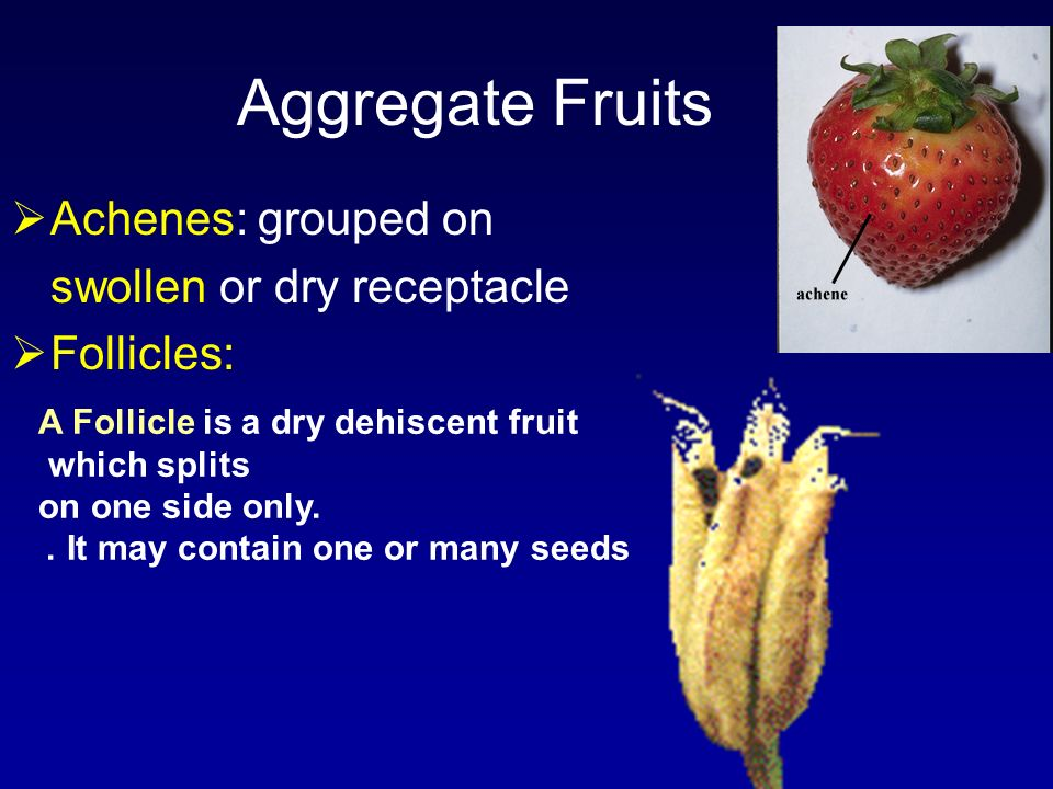Aggregate Fruits Achenes: grouped on swollen or dry receptacle Follicles: A Follicle is a dry dehiscent fruit which splits on one side only. It may co