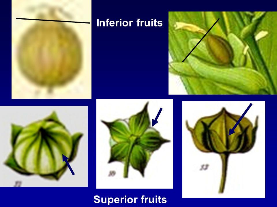 Inferior fruits Superior fruits
