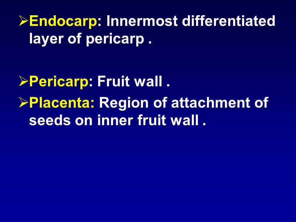 Endocarp: Innermost differentiated layer of pericarp. Pericarp: Fruit wall. Placenta: Region of attachment of seeds on inner fruit wall.