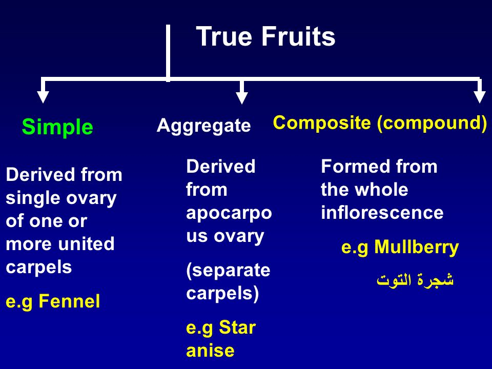 True Fruits Derived from single ovary of one or more united carpels e.g Fennel Derived from apocarpo us ovary (separate carpels) e.g Star anise Simple