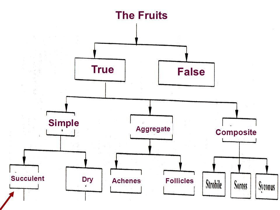 True False Succulent Aggregate Composite Simple Dry AchenesFollicles The Fruits True False Succulent Aggregate Composite Simple Dry AchenesFollicles T