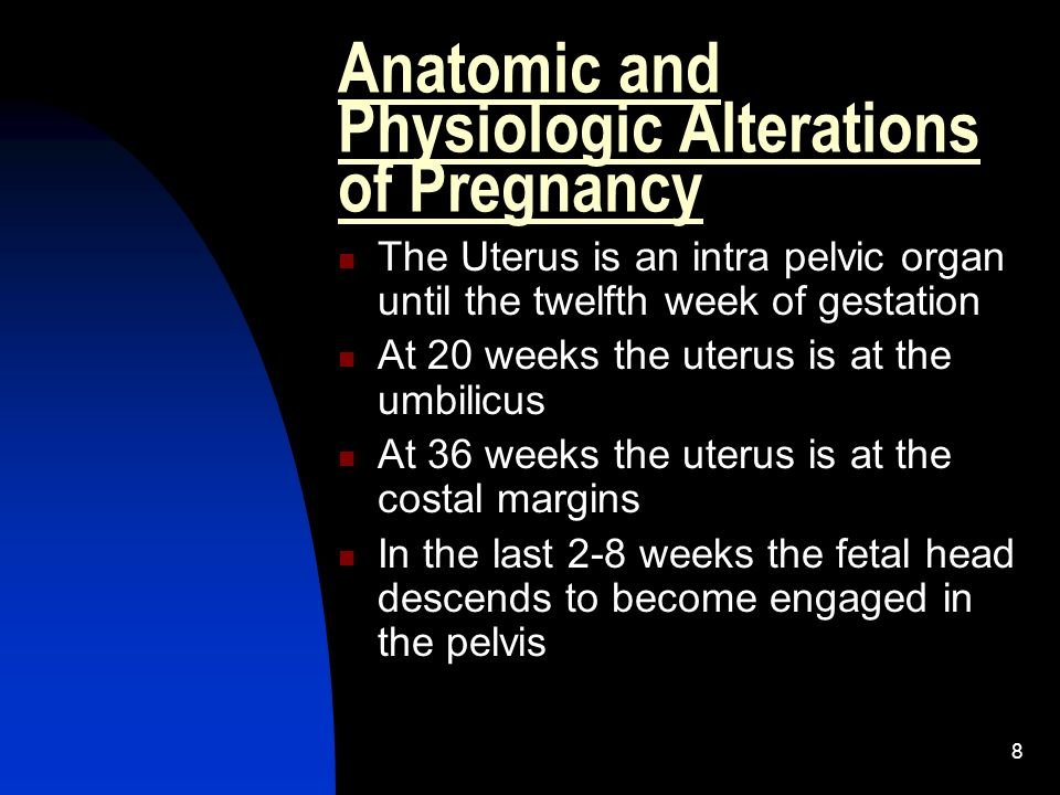 8 Anatomic and Physiologic Alterations of Pregnancy The Uterus is an intra pelvic organ until the twelfth week of gestation At 20 weeks the uterus is
