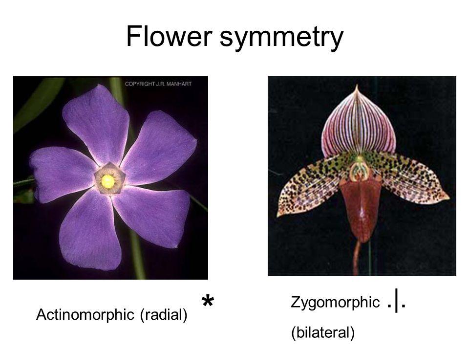 Flower symmetry Actinomorphic (radial) * Zygomorphic.|. (bilateral)