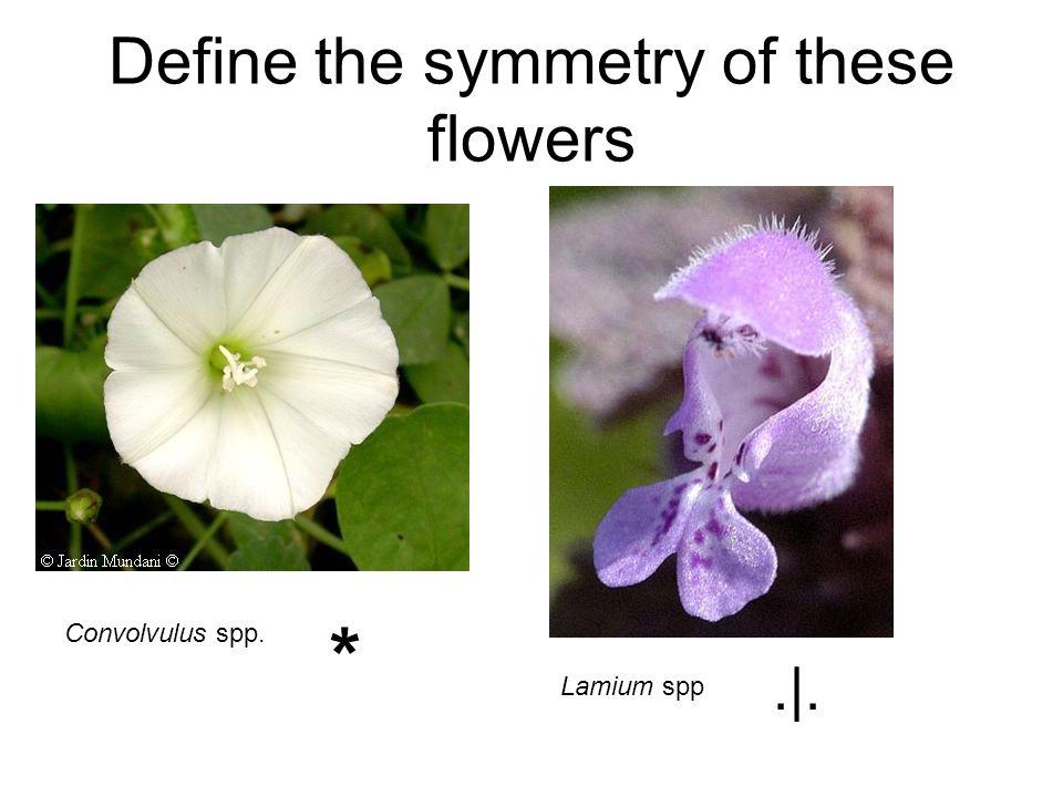 Define the symmetry of these flowers Convolvulus spp. Lamium spp *.|.