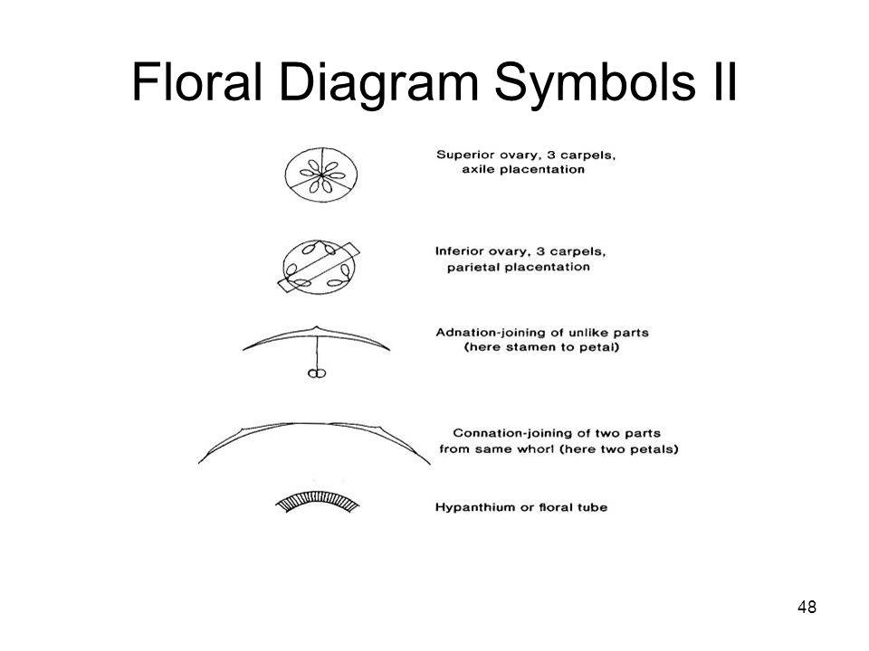 48 Floral Diagram Symbols II