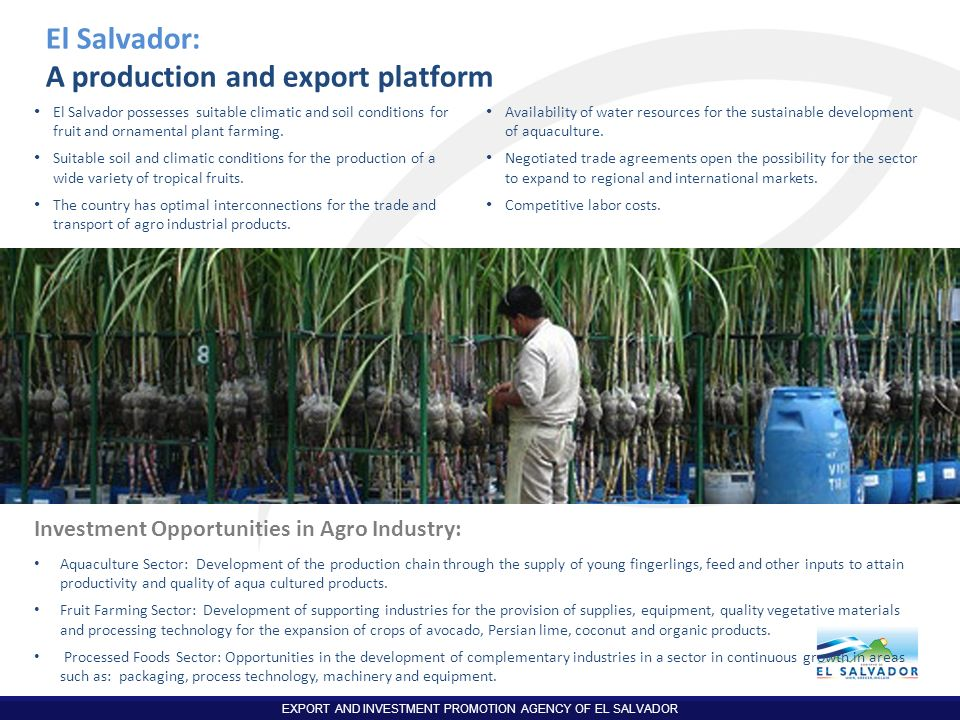EXPORT AND INVESTMENT PROMOTION AGENCY OF EL SALVADOR El Salvador: A production and export platform El Salvador possesses suitable climatic and soil c