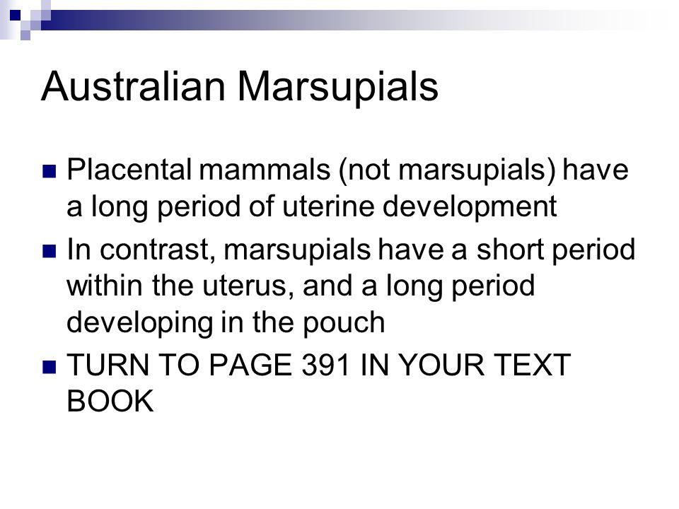 Australian Marsupials Placental mammals (not marsupials) have a long period of uterine development In contrast, marsupials have a short period within