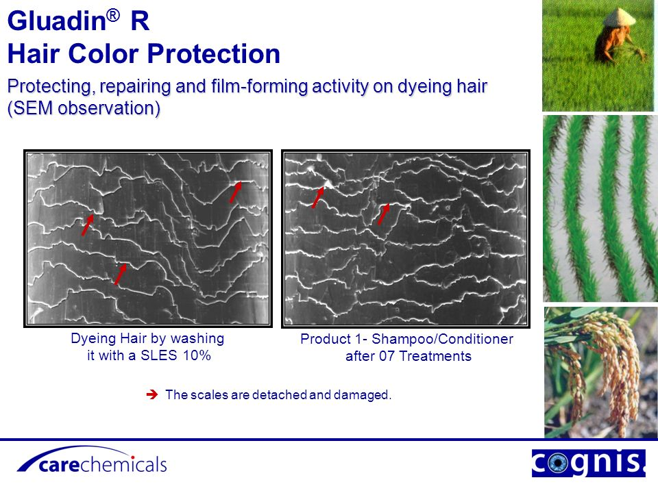 Product 3 - Shampoo/Conditioner after 07 Treatments The cuticle scales recover their cohesion, hair stem is blocking the dyes and protected.