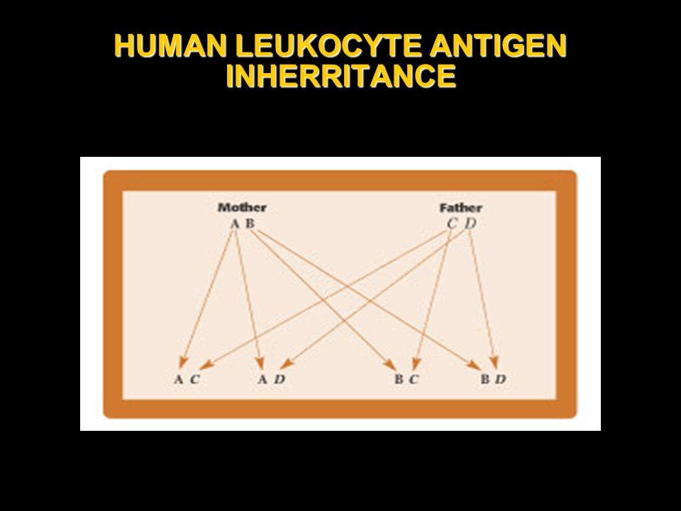 HUMAN LEUKOCYTE ANTIGEN INHERRITANCE