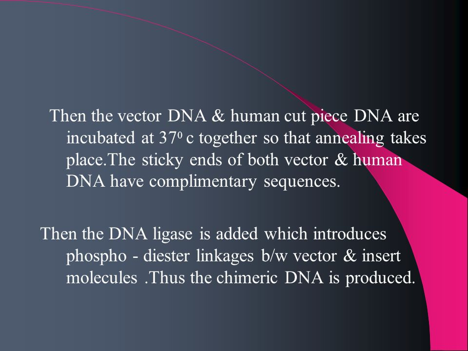 Then the vector DNA & human cut piece DNA are incubated at 37 0 c together so that annealing takes place.The sticky ends of both vector & human DNA ha