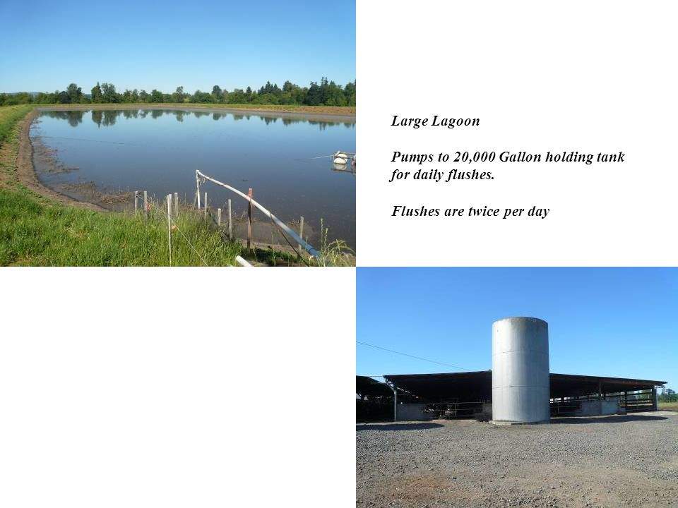 Large Lagoon Pumps to 20,000 Gallon holding tank for daily flushes. Flushes are twice per day