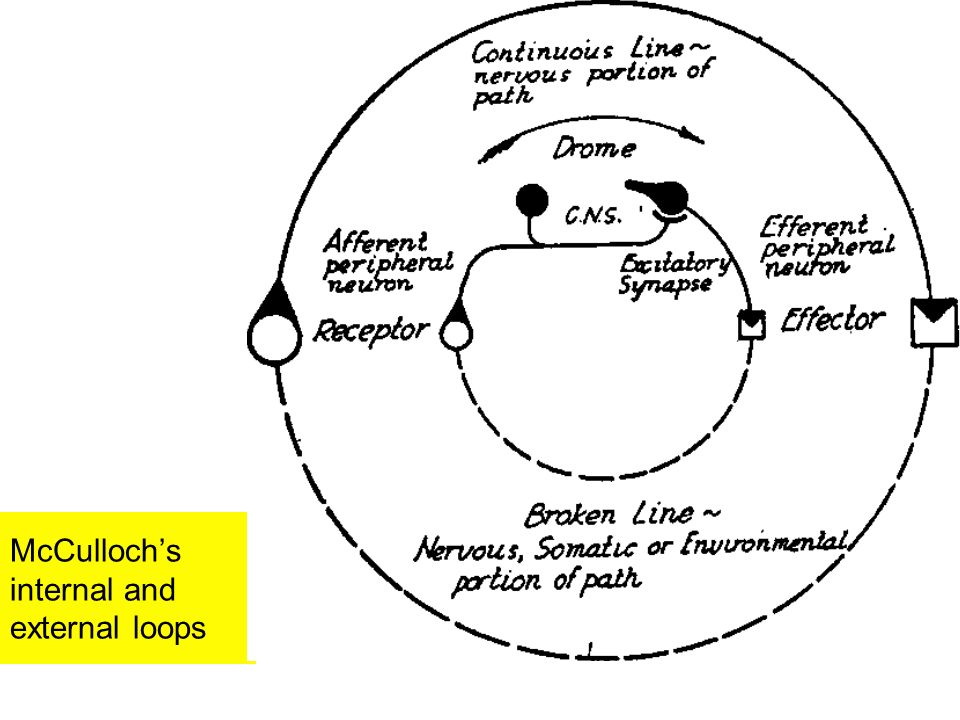 McCullochs internal and external loops