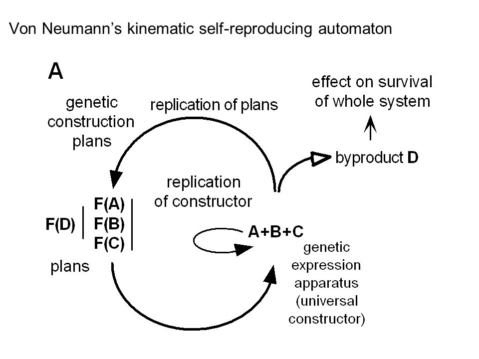 Von Neumanns kinematic self-reproducing automaton