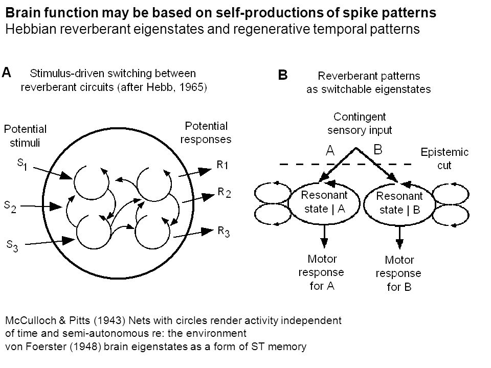 Brain function may be based on self-productions of spike patterns Hebbian reverberant eigenstates and regenerative temporal patterns McCulloch & Pitts
