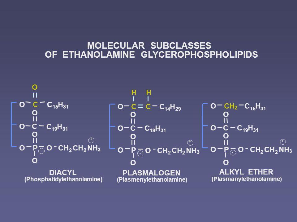 DIACYL (Phosphatidylethanolamine) PLASMALOGEN (Plasmenylethanolamine) ALKYL ETHER (Plasmanylethanolamine) MOLECULAR SUBCLASSES OF ETHANOLAMINE GLYCEROPHOSPHOLIPIDS COC 15 H 31 OC O C 19 H 31 P O OCH 2 NHO O O CH 2 + - CO OC O P O O O CC 14 H 29 C 19 H 31 OCH 2 NH 3 CH 2 + - HH 2 O OC O P O O O O 2 NH 3 CH 2 + - C 19 H 31 C 15 H 31 3