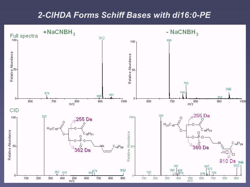 2-ClHDA Forms Schiff Bases with di16:0-PE