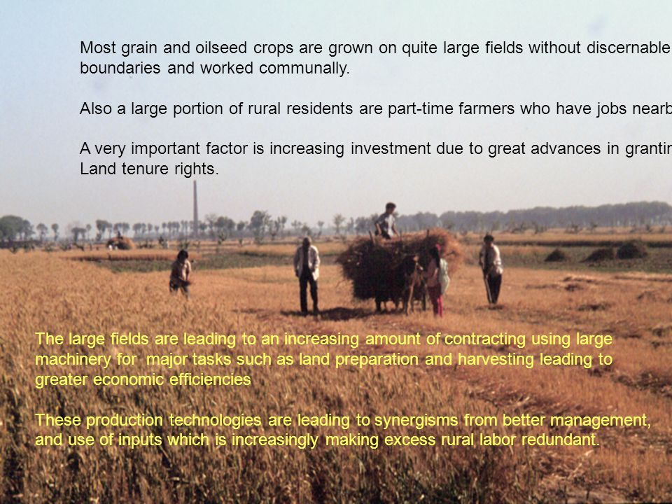 Most grain and oilseed crops are grown on quite large fields without discernable boundaries and worked communally.