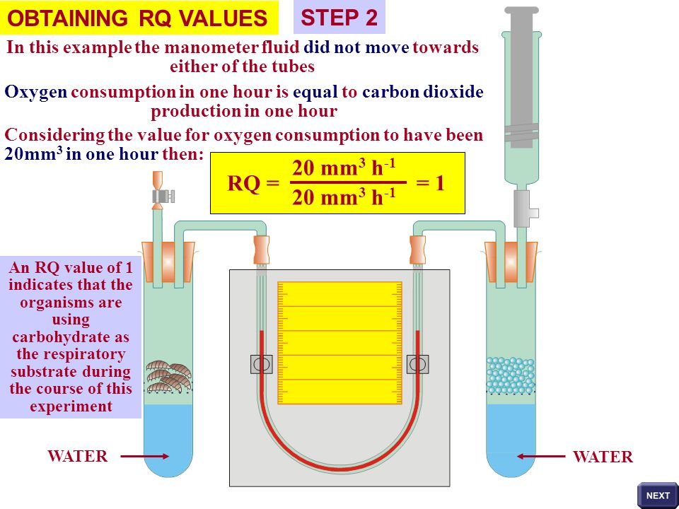 WATER OBTAINING RQ VALUES STEP 2 In this example the manometer fluid did not move towards either of the tubes Oxygen consumption in one hour is equal