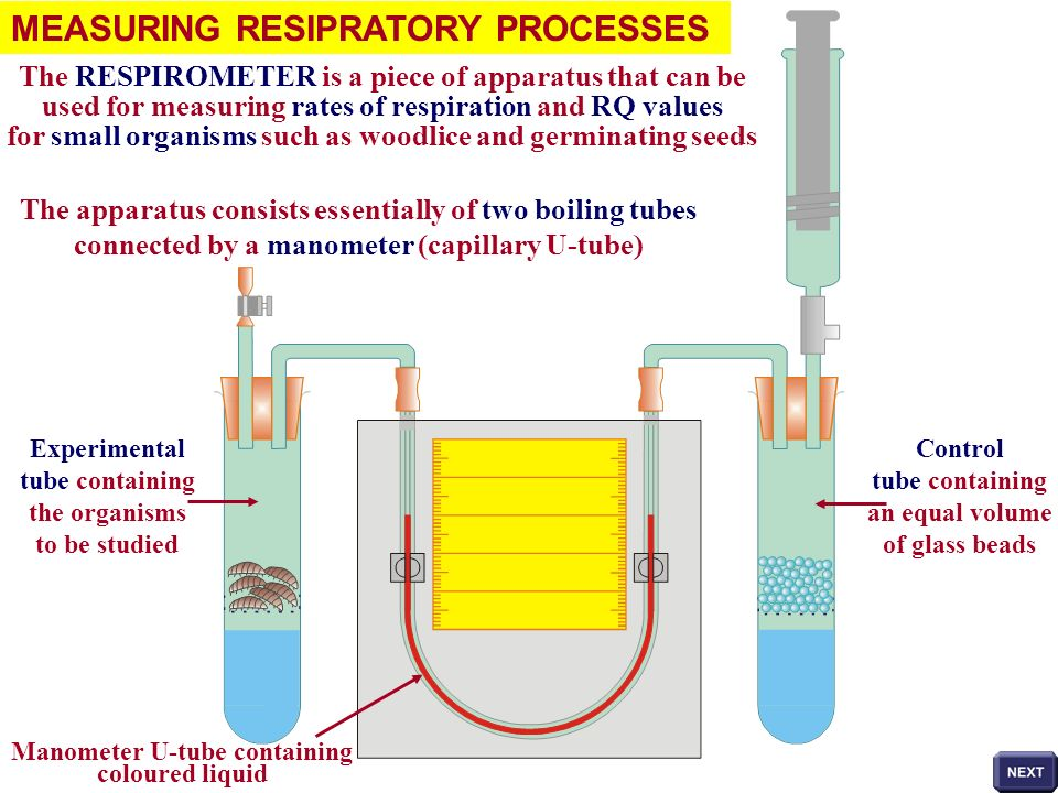 MEASURING RESIPRATORY PROCESSES The RESPIROMETER is a piece of apparatus that can be used for measuring rates of respiration and RQ values for small o