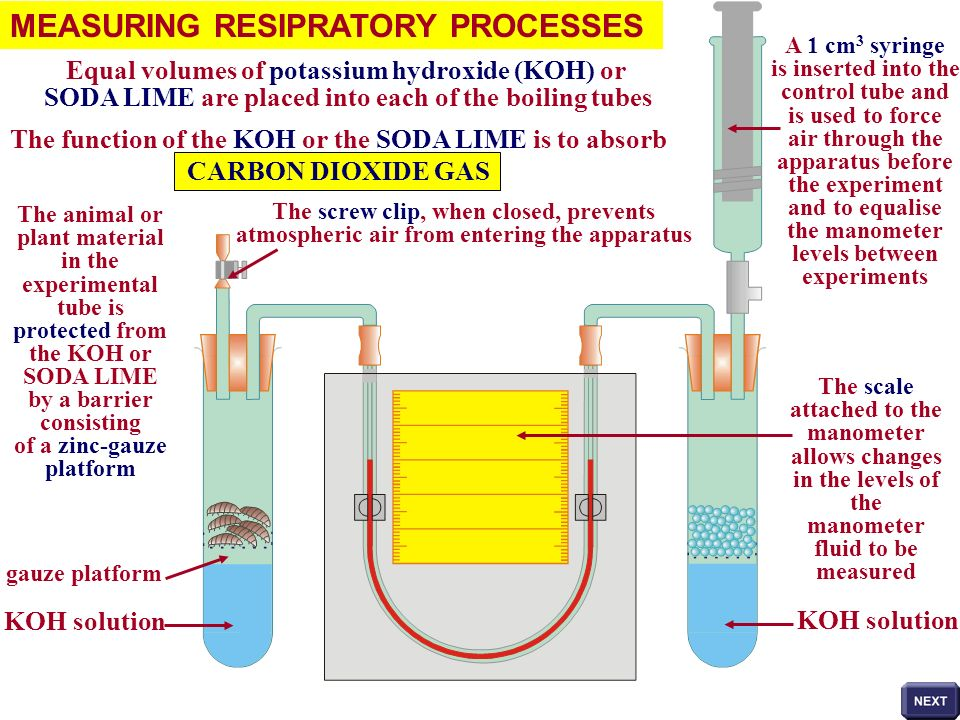 MEASURING RESIPRATORY PROCESSES The principle behind the functioning of the apparatus is the changes in AIR PRESSURE within the tubes during the course of the experiment As the organisms in the experimental tube respire, they remove oxygen molecules from the tube and release carbon dioxide molecules into the tube O2O2 CO 2 The released carbon dioxide is absorbed by the KOH solution The total number of gas molecules in the experimental tube will therefore be reduced The air pressure in the experimental tube therefore decreases and the manometer fluid will be pushed upwards in the left-hand side of the U-tube
