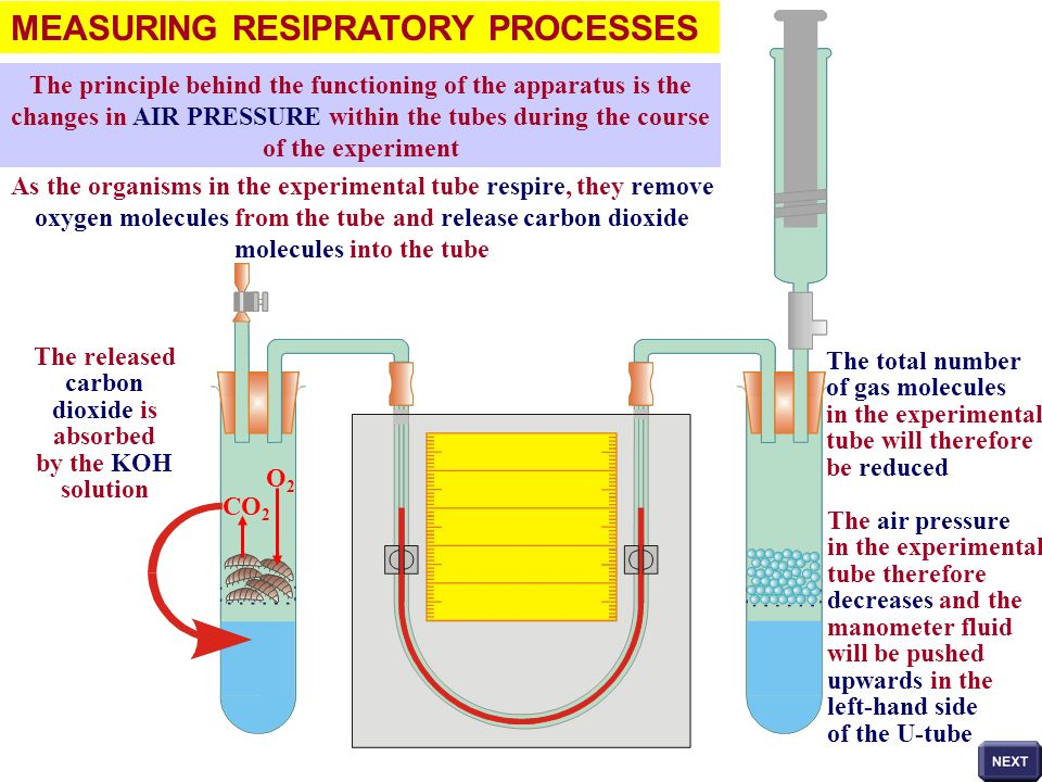 MEASURING RESIPRATORY PROCESSES The manometer fluid is pushed towards the experimental tube The distance moved by the fluid can be measured form the scale distance moved by the fluid