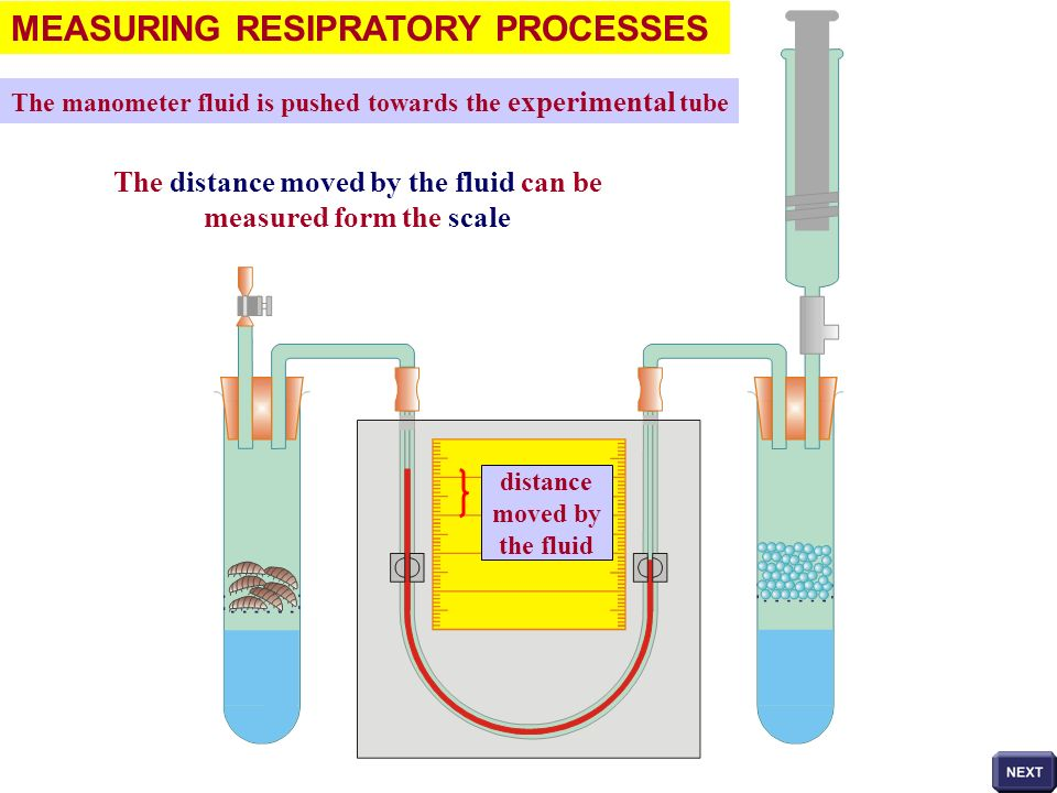 MEASURING RESIPRATORY PROCESSES The manometer fluid is pushed towards the experimental tube The distance moved by the fluid can be measured form the s