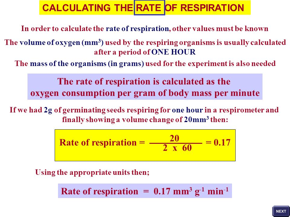 CALCULATING THE RATE OF RESPIRATION In order to calculate the rate of respiration, other values must be known The volume of oxygen (mm 3 ) used by the