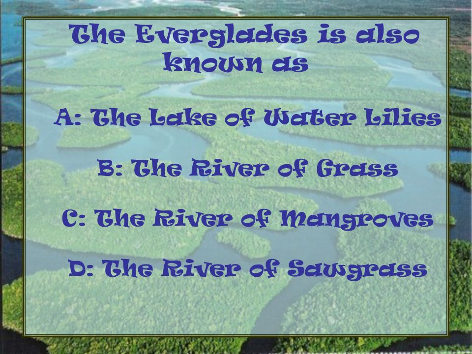 The Everglades is also known as A: The Lake of Water Lilies B: The River of Grass C: The River of Mangroves D: The River of Sawgrass