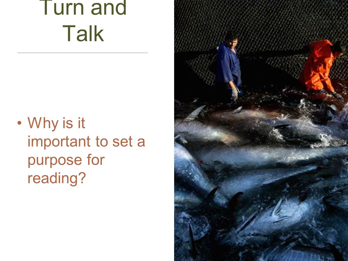 Turn and Talk Why is it important to set a purpose for reading?